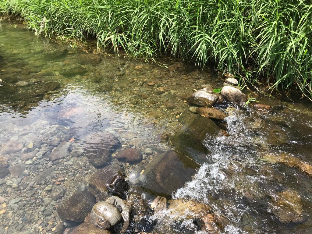 蛇石せせらぎ公園の小川
